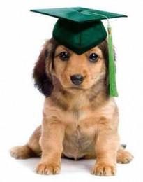 Cute puppy school graduate
