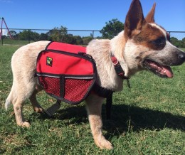 Red Dog with backpack