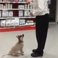 Teaching a puppy to sit and stay