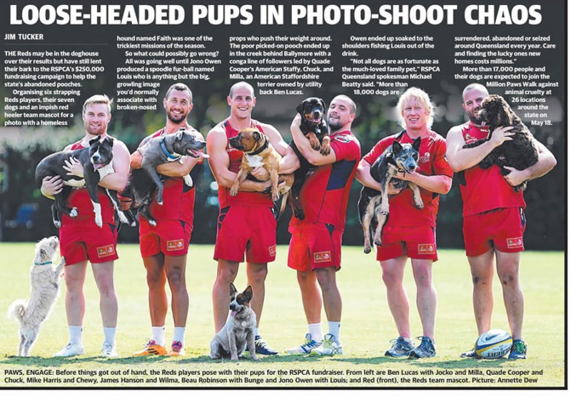Press article - Million Paws walk - Qld Reds