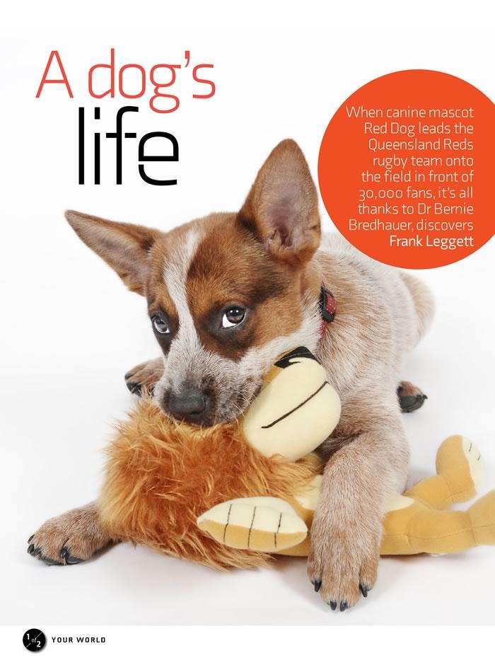 Red Dog article in Vet Practice magazine