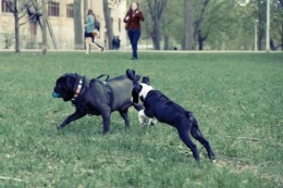 Dog behaviour explained