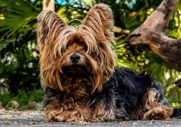Small dog park behaviour