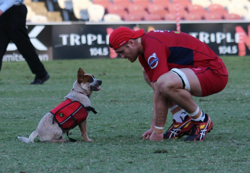 Red Dog with a Union player