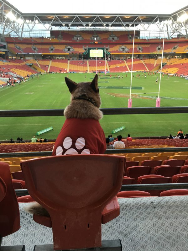 Red Dog enjoying a game of union