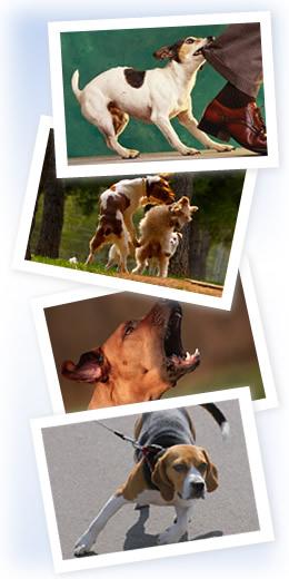 Dog behavior problems