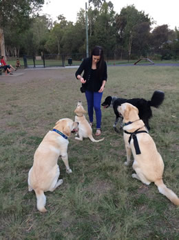 Dog obedience training in the park