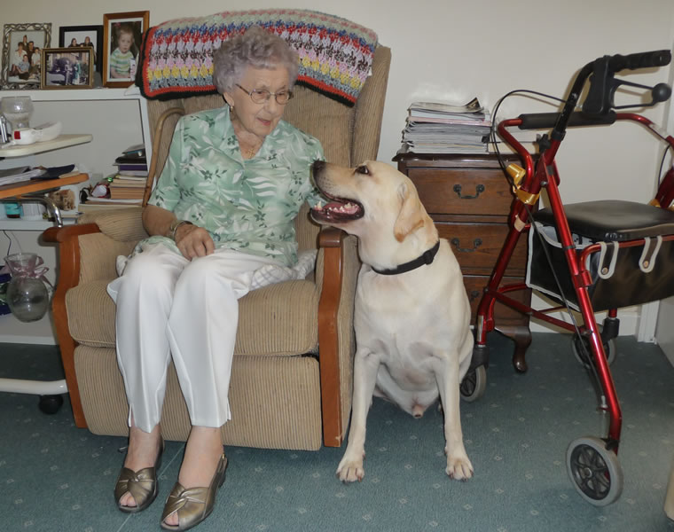 Lex the labrador chats to a nursing home resident...