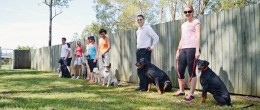 Group dog obedience class