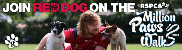 Join Red dog on the million paws walk