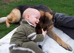 Baby with German Shepherd dog