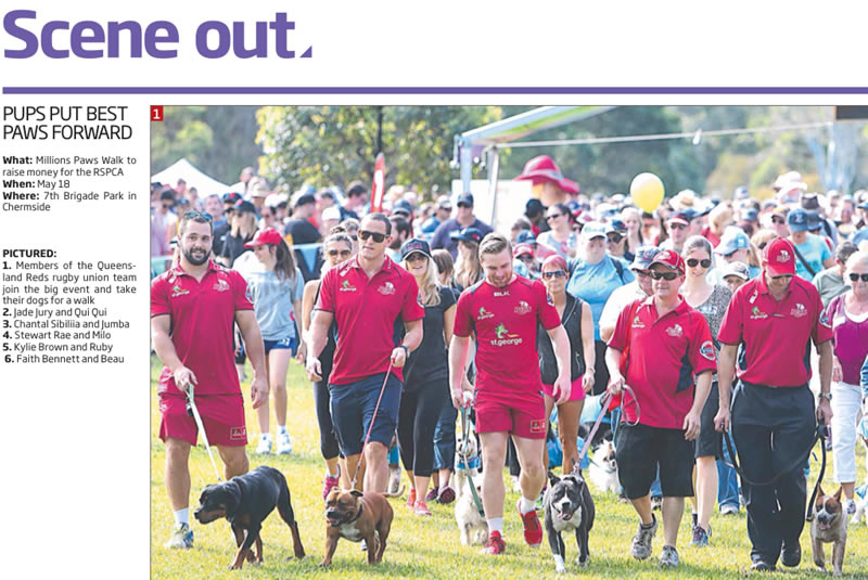 Million Paws Walk 2014 article