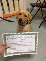 puppy-Tank-certificate