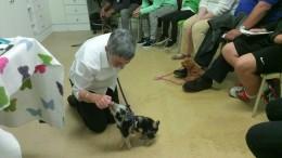 piglet georges puppy school