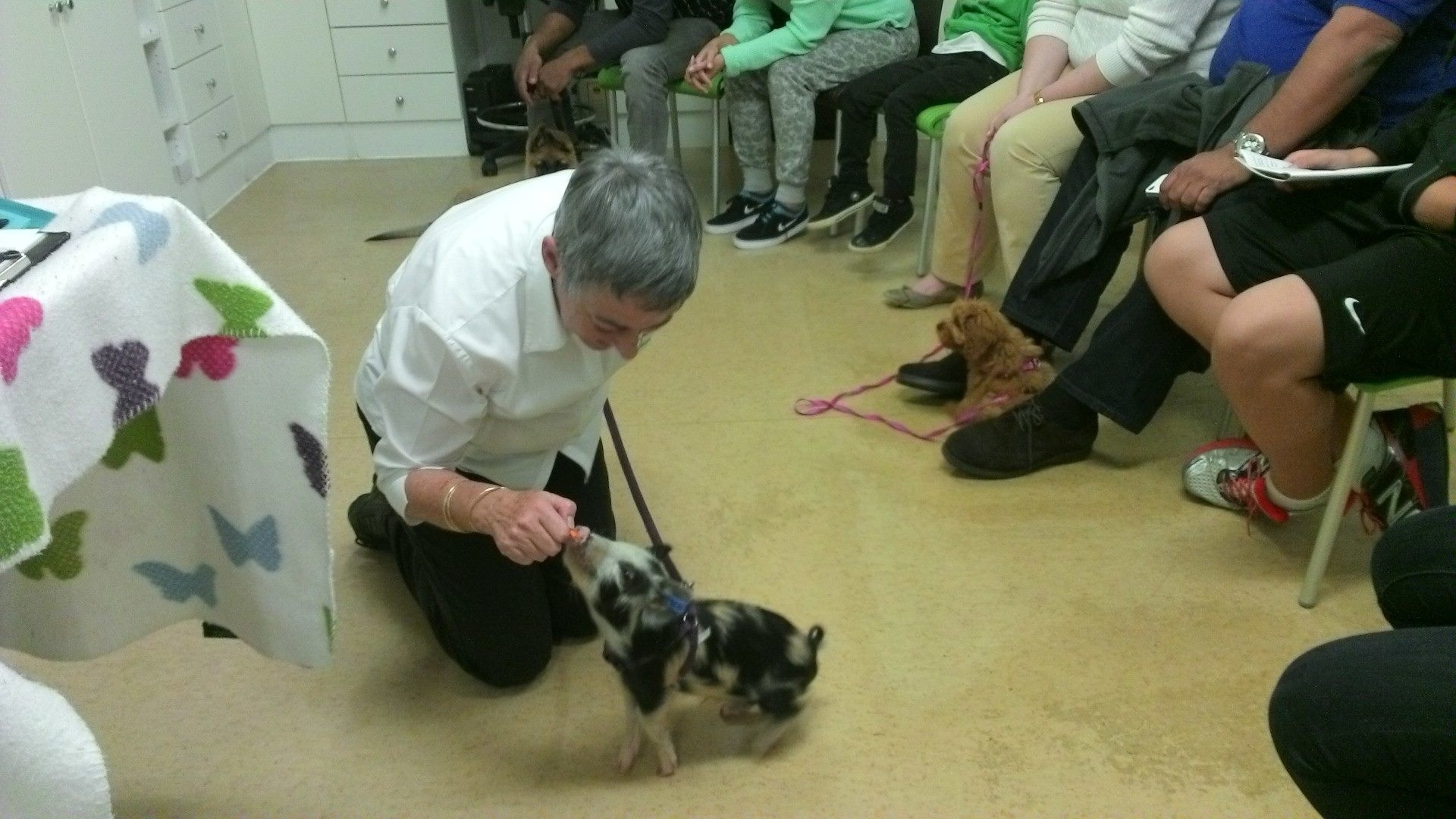piglet georges puppy school