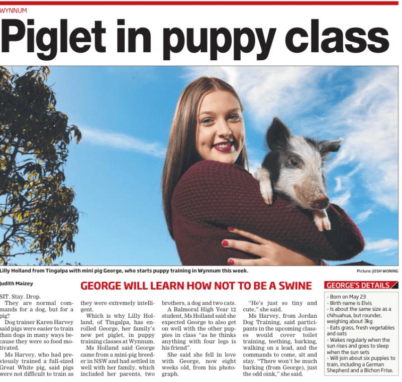 Piglet Puppy School Brisbane