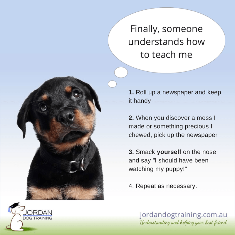 Jordan Dog Training - how to train a puppy