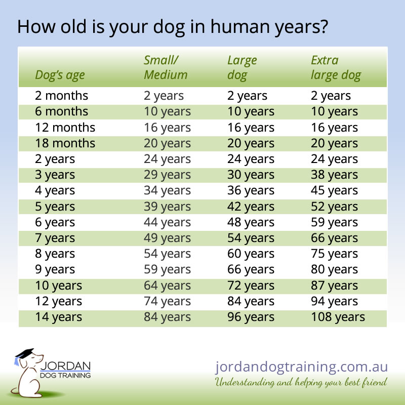 Dog to human years converter