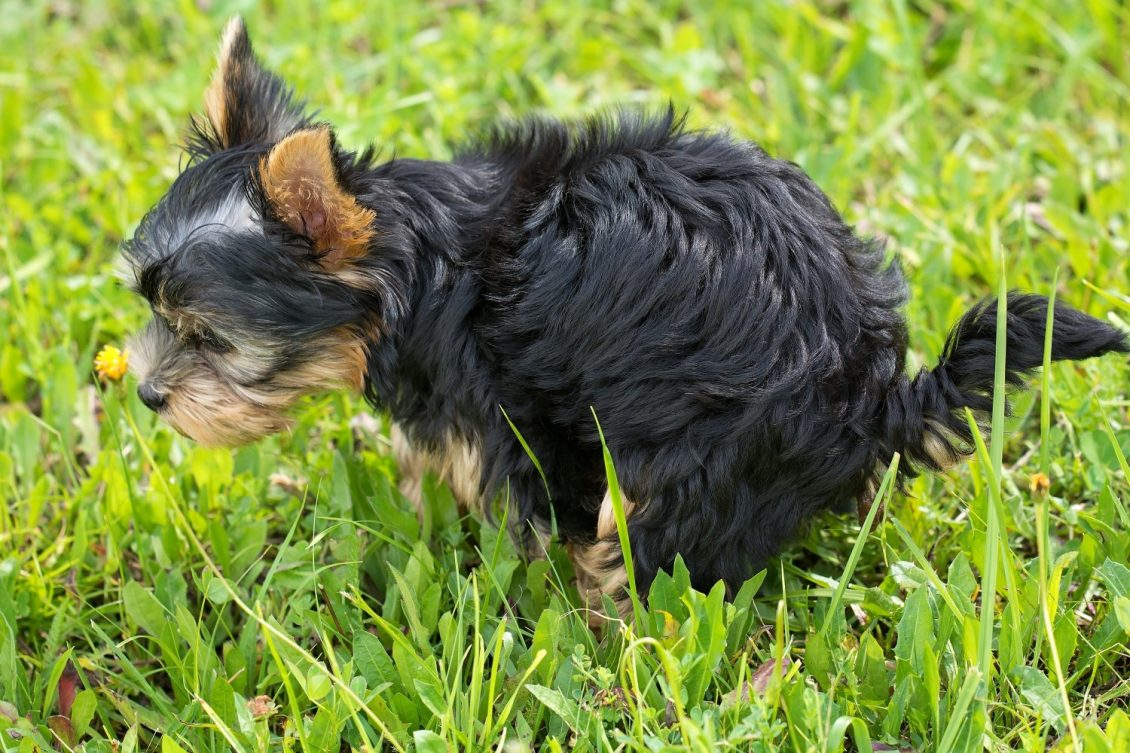 General Tips For Bringing A New Puppy Home Pt 3 Jordan Dog Training