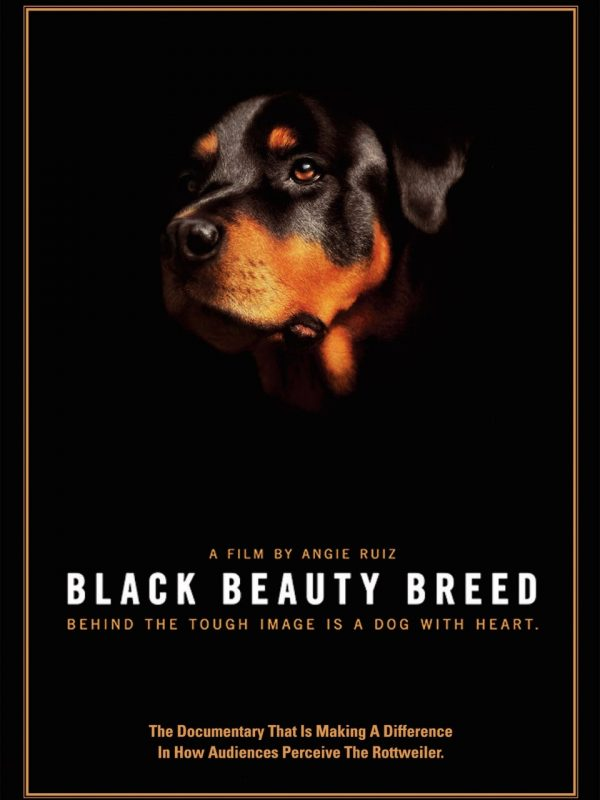 Black Beauty Breed Film Cover