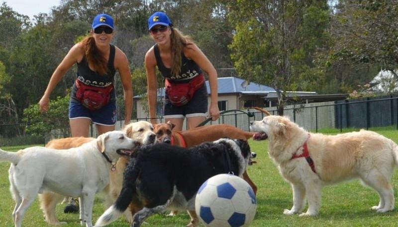 brisbane dog day care