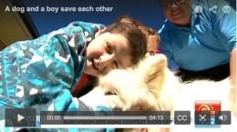 Dog and boy video screenshot