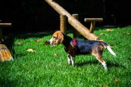 dog park behaviour tips