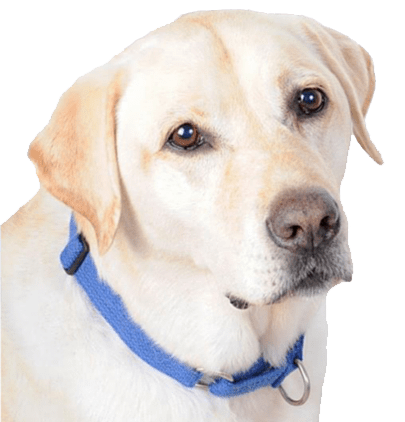 Jordan Dog Training Slip Collar