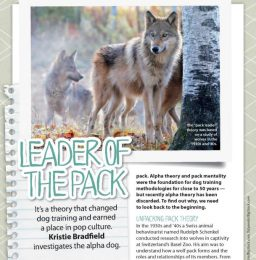 Jordan Dog Training Blog - Pack Mentality