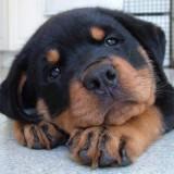 cute puppies gallery