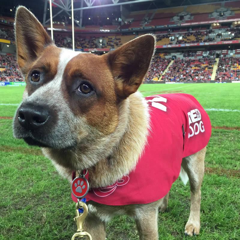 Queensland Ruby Mascot