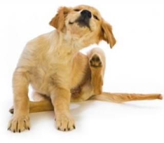 b_puppy-scratching