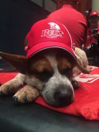 red-cap1