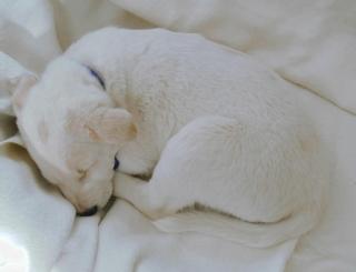 Dez_puppy
