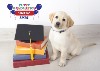 Puppyschool-Bella